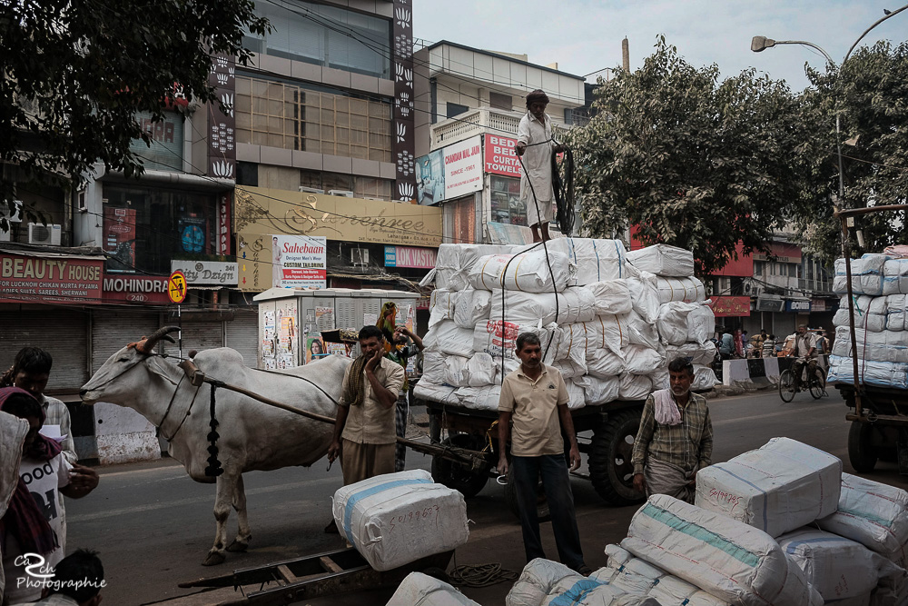 Kühe in Indien Carsten Schröder Fotografie
