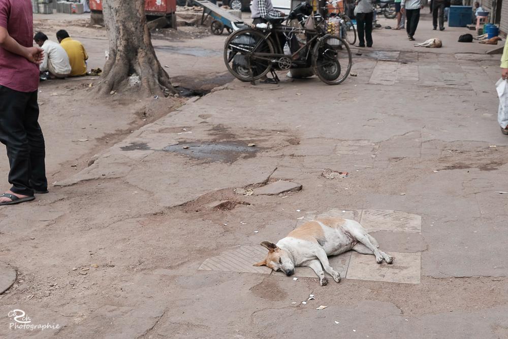 Hund in der Straße Carsten Schröder Fotografie